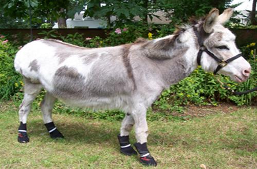 Hi, My new boots