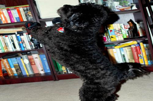 My dog Gixxer