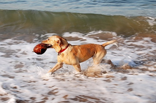 CALMING THE HYPER DOG